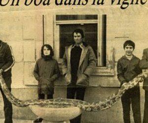 Un serpent dans la vigne, une trouvaille de taille